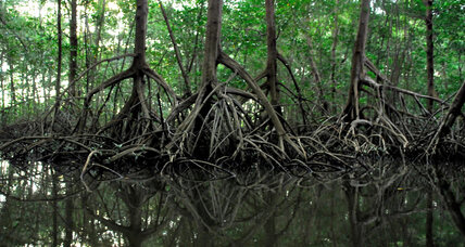 Women lead effort to protect Sri Lanka's mangroves