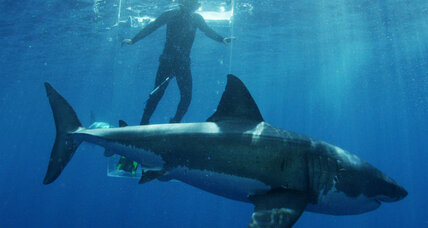 Shark saved by humans: What response tells us about public perception