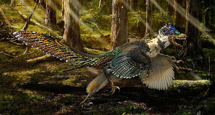 Ancient Chinese velociraptor cousin had sharp claws, looked fabulous