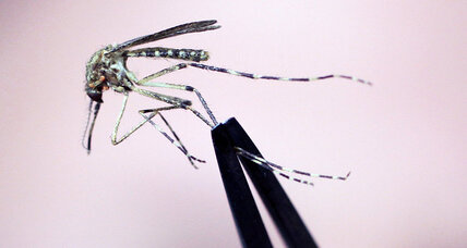 How do mosquitoes find food? First, they smell you, scientists say