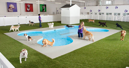 JFK to construct luxurious terminal for traveling pets