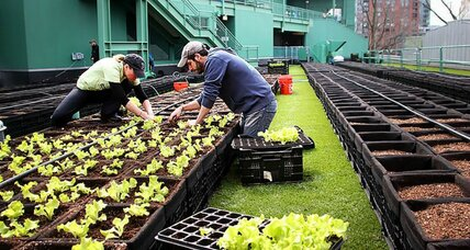 Forget peanuts and Cracker Jack: These baseball teams have stadium-grown greens