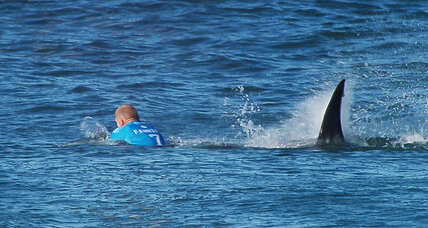 Surfer Mick Fanning survives shark attack: What did he do right? (+video)