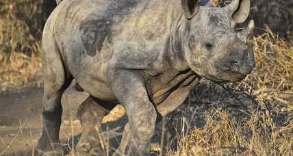 Secret South African orphanage cares for baby rhinos