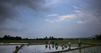 Rice revolution? New rice could help feed world, fight climate change.