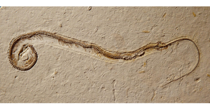 Four-legged snake sheds light on mysteries of reptile evolution
