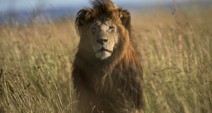 Cecil the lion: How big a business is big game hunting? (+video)