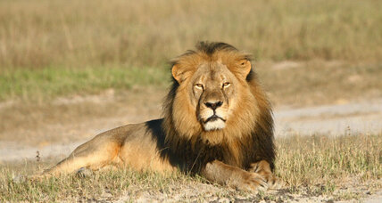 Zimbabwe to US: Extradite dentist for killing Cecil the lion (+video)