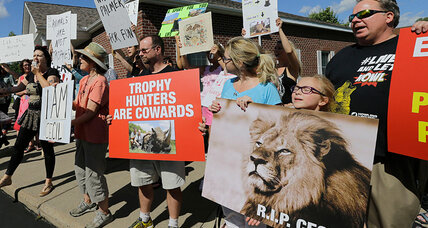 Zimbabwe calls for dentist to be extradited over Cecil the lion: Is US likely to cooperate?