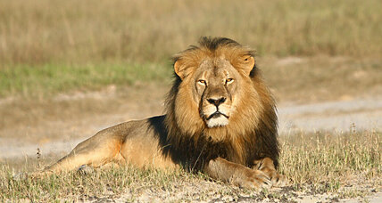Cecil the lion bill: Should Congress stop big game hunting?