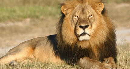 Cecil's brother alive and well, but another lion reportedly shot