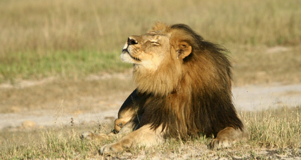Cecil the lion's killing sparks unprecedented global backlash