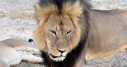 Is our outrage over Cecil the Lion going too far?