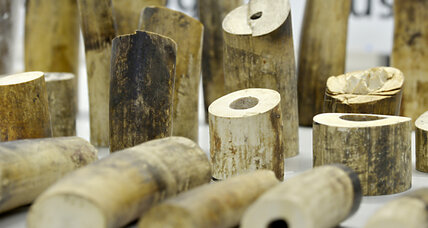 Swiss customs seize $400,000 of elephant ivory en route to China