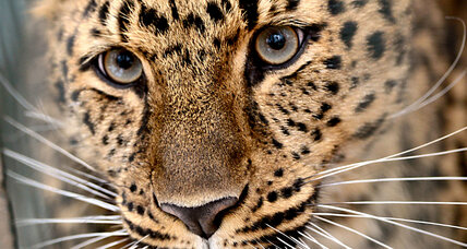 The eyes have it: What pupils reveal about predators and prey