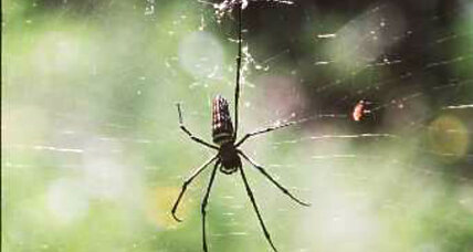 Giant spider webs invade Dallas suburb: Where did they come from?