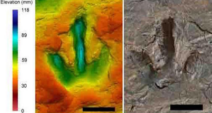 Did dinosaurs walk together on this beach? Amazing footprints yield clues.
