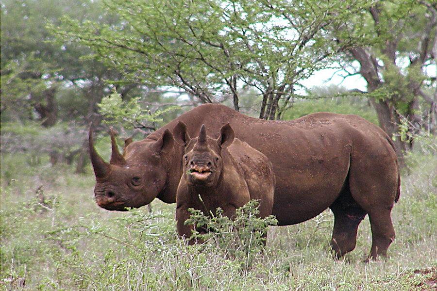 save black rhinos from poachers