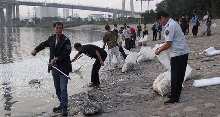 Thousands of dead fish appear on Tianjin river week after deadly blasts
