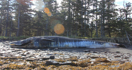 Aquatic mystery: Why did 30 whales die in the Gulf of Alaska?
