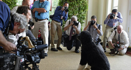 National Dog Day: top 5 presidential pooches