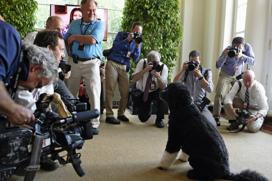 National Dog Day: top 5 presidential pooches - CSMonitor com