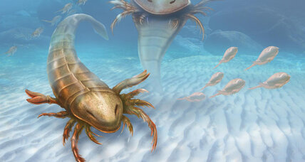 A man-sized sea scorpion once roamed ancient ocean ... of Iowa?