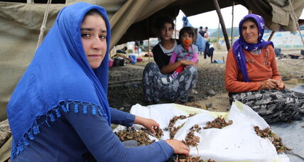 How Turkey is tackling child labor in hazelnut harvesting