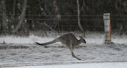 California Kangaroo? Why Australia is lobbying in the Golden State