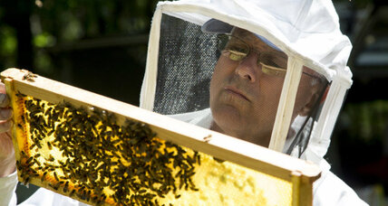 Los Angeles buzzing over backyard beehives