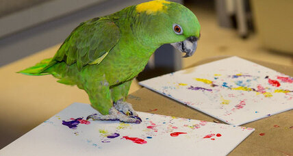 Have you ever seen a parrot painting a portrait?