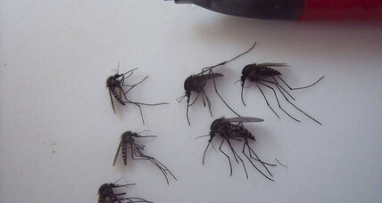 The Arctic mosquito problem: why there is no quick fix