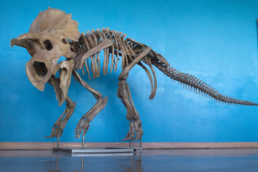 dinosaur radiocarbon dating How carbon-14 has been used to date decontaminated dinosaur bones to between 22,000 and 39,000 years before present how accurate is radiocarbon dating.