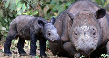 Sumatra has some big news to celebrate this World Rhino Day