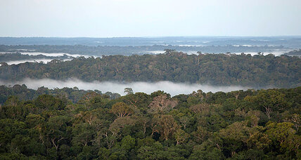 Could sustainable logging in the Amazon help slow global warming?