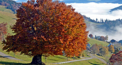 Peculiar behavior of European trees raises climate change questions
