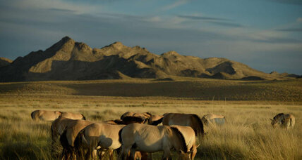 Wild horse genome reveals hidden costs of domestication