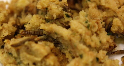 Could mealworms solve our plastic problem?