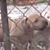 How the ASPCA rescued 23 pitbulls in a dog-fighting investigation