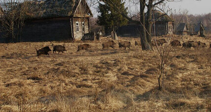 After three decades, is Chernobyl now a haven for wildlife?