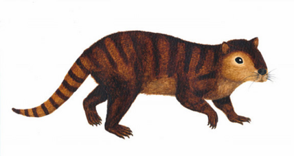 Furry, beaver-like creature thrived after dino-killing asteroid