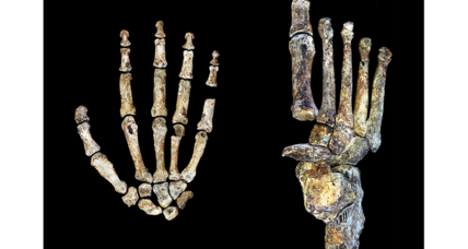 Homo naledi: How ancient hands and feet shed light on human evolution