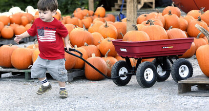 Pumpkin shortage won't affect Halloween, but will there be pie?