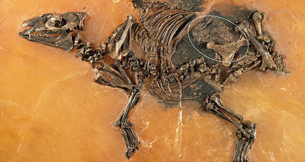 What can a 48-million-year-old horse uterus teach us about ourselves?