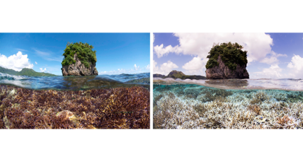 Major coral bleaching crisis spreads worldwide