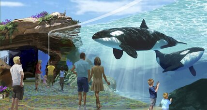 Should Sea World be allowed to breed orcas?
