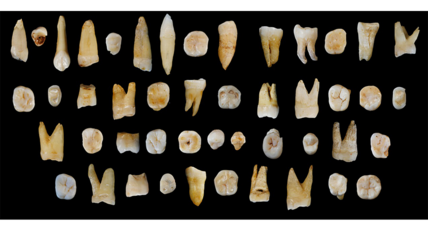 Can 100,000-year-old teeth change human history?