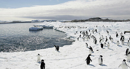 What's behind the disappearance of Antarctic snow?