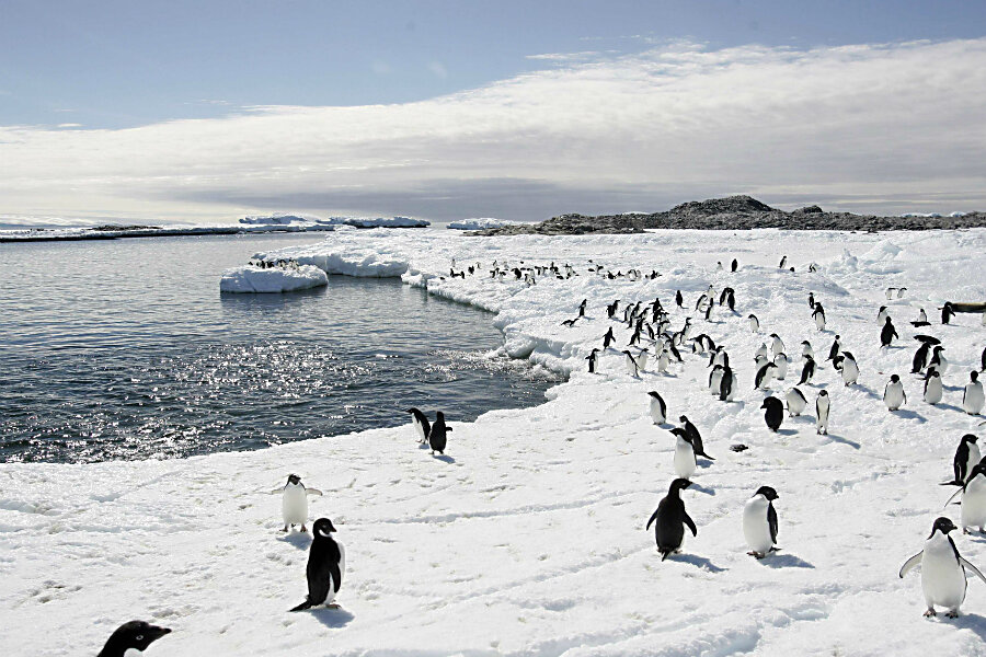 Vegetation Antarktis
