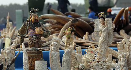 Global efforts against ivory kingpins still falling short, say experts